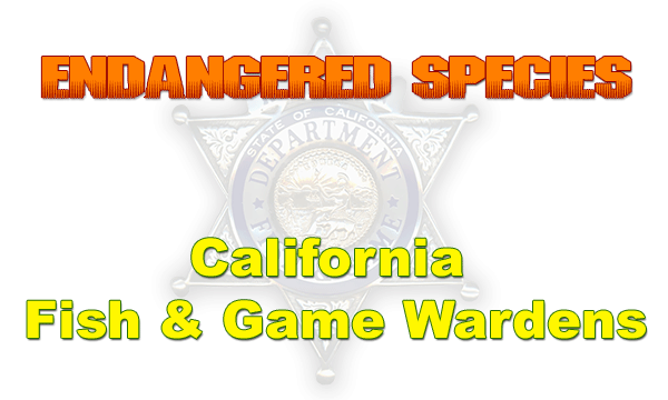 Snow goose productions endangered species california for Ca fish and game